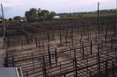 Schön 2010: Valentine Livestock Auction